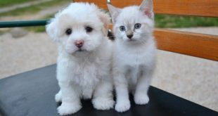 Bravecto går bra att använda mot fästingar hos hund och katt.